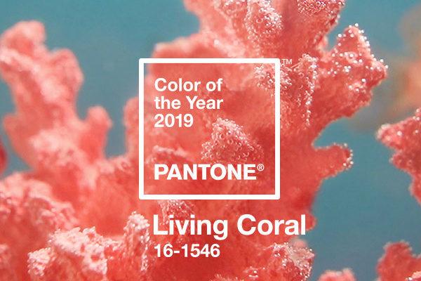 Living Coral / manzuko