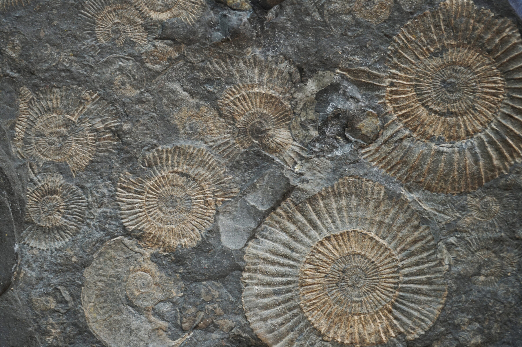 Amonit – relikt przeszłości w dzisiejszej modzie