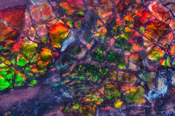 Tęczowa powierzchnia kanadyjskiego ammolitu
