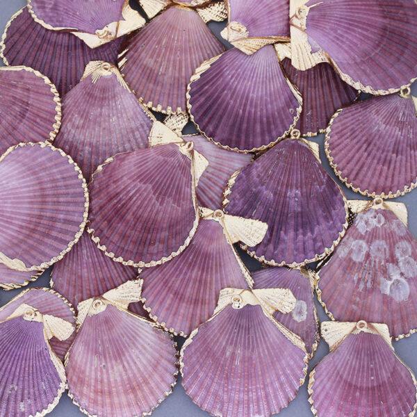 Barwione na fiolet muszle przegrzebków